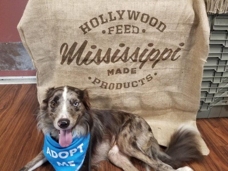 Meet & Greet at Hollywood Feed (Garland) - 10/19