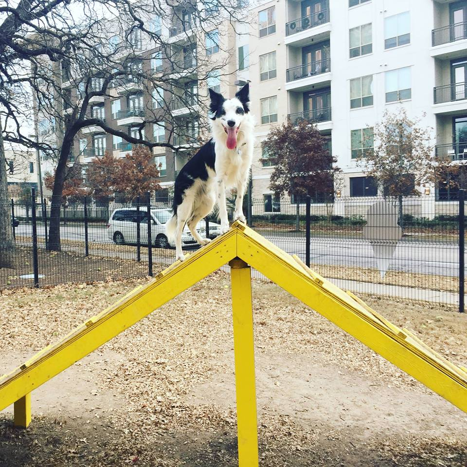 DFW Border Collie & Rescue Dog Meet-Up